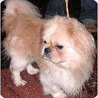 Adopt A Pet :: Henry - Mays Landing, NJ