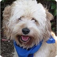 Adopt A Pet :: Stanley - Encinitas, CA
