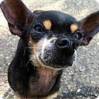 Adopt A Pet :: Dory - Santa Barbara, CA