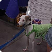 Adopt A Pet :: Ava - Vidor, TX