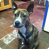 Adopt A Pet :: Sweet Pea - Vista, CA