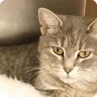 Adopt A Pet :: Val - Colmar, PA