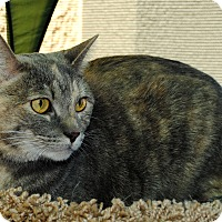 Adopt A Pet :: Casey - Palmdale, CA