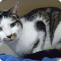 Adopt A Pet :: Siena - Hamburg, NY