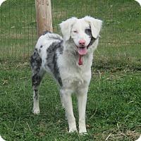 Adopt A Pet :: Sydnie - Minneapolis, MN