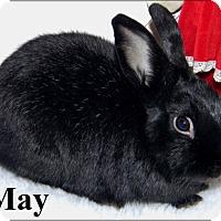 Adopt A Pet :: May - Auburn, CA