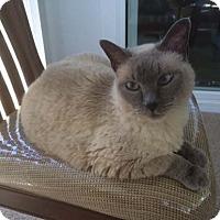 Adopt A Pet :: Lucy - Laguna Woods, CA