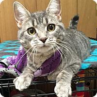 Adopt A Pet :: Rue - Lutherville, MD