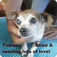Adopt A Pet :: Tinker - Chandler, AZ