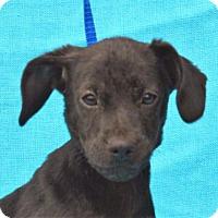 Adopt A Pet :: **HOWARD** MEET APRIL 30TH! - Mukwonago, WI