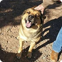 Anatolian Shepherd Mix Dog for adoption in Sedona, Arizona - Jasper