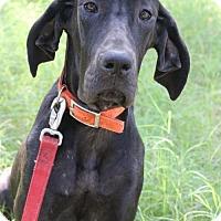 Adopt A Pet :: Jade - Helotes, TX