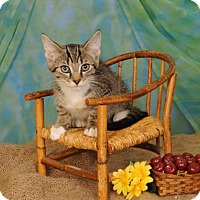 Adopt A Pet :: Reggie - mishawaka, IN