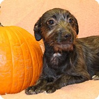 Adopt A Pet :: Britt - Modesto, CA