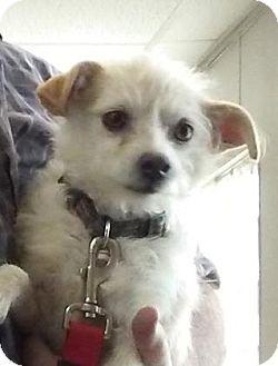 Terrier (Unknown Type, Medium) Mix Dog for adoption in Visalia, California - Gidget
