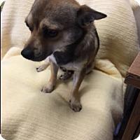 Adopt A Pet :: BUSTER - Elk Grove, CA