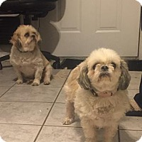 Adopt A Pet :: Rocky & Lucy - Tenafly, NJ