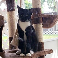 Adopt A Pet :: Cats - Miami, FL