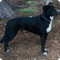 Adopt A Pet :: Roro aka Rosie - Woodland, CA