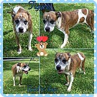 Adopt A Pet :: tigger - Homestead, FL