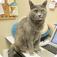 Adopt A Pet :: Minnie - Gilbert, AZ