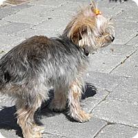 Adopt A Pet :: Pumpkin - Orange County, CA