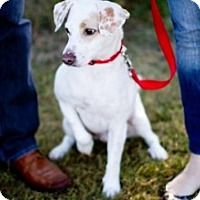 Adopt A Pet :: Charlie in Houston - Houston, TX