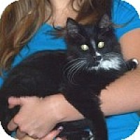 Adopt A Pet :: K-Willow2-Elton - Colorado Springs, CO