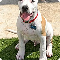 Adopt A Pet :: Bentley - San Diego, CA