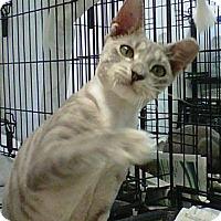 Adopt A Pet :: Spunky - Cocoa, FL