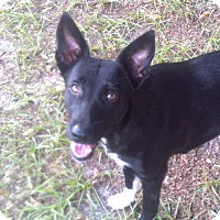 Adopt A Pet :: Jillian - Williston, FL