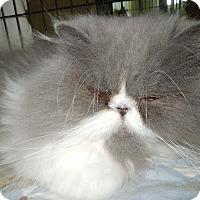 Adopt A Pet :: Mexicali Rose - Medina, OH