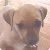 Adopt A Pet :: Alabama - Toms River, NJ