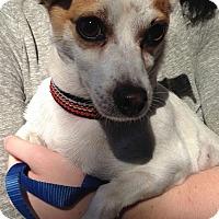 Adopt A Pet :: Fellow - San Francisco, CA