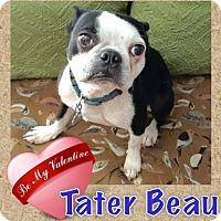 Adopt A Pet :: Tater Beau - various cities, FL