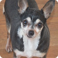Adopt A Pet :: Cora - Prole, IA