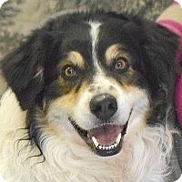 Adopt A Pet :: Doppler - Huntley, IL