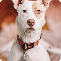 Adopt A Pet :: Grace - Portland, OR