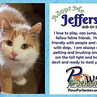 Adopt A Pet :: Jefferson - Bealeton, VA