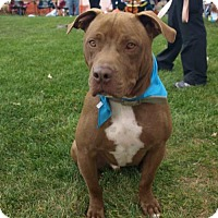 Adopt A Pet :: Ryland - Great with dogs and cats! - Columbia, MD
