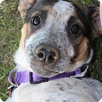 Adopt A Pet :: LULA MAE - Pembroke, NY