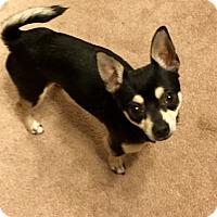 Adopt A Pet :: Jeffrey - Sparta, NJ