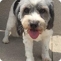 Adopt A Pet :: Patches - Summerville, SC