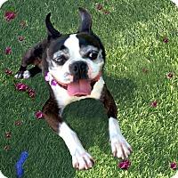 Adopt A Pet :: Buster NEEDS FOSTER HOME! - Redondo Beach, CA