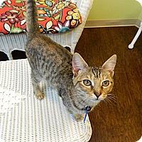 Adopt A Pet :: Greta - The Colony, TX