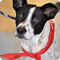 Adopt A Pet :: Milo - Albemarle, NC