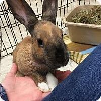 Adopt A Pet :: Linden - Woburn, MA