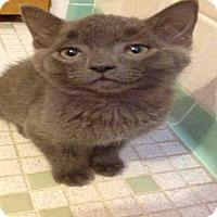 Adopt A Pet :: JUMANJI - Pittsburgh, PA