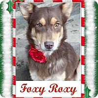 Adopt A Pet :: Foxy Roxy ~ Funny Girl! - Memphis, TN