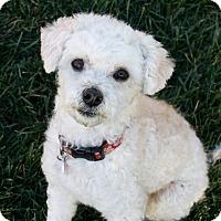 Adopt A Pet :: Tobie (and Katie) - Los Angeles, CA